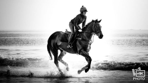 Galloping Horse on beach - Shot with the Lumix GH%